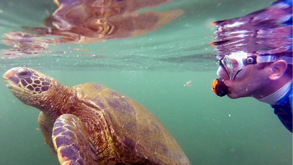 Csendes-óceáni levesteknős és Micsoda Turista